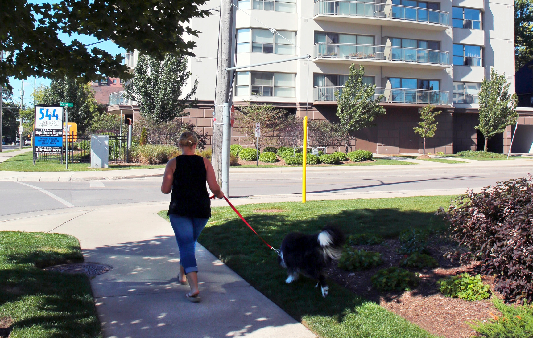 woman walking her dog in the park near 544 Talbot Street